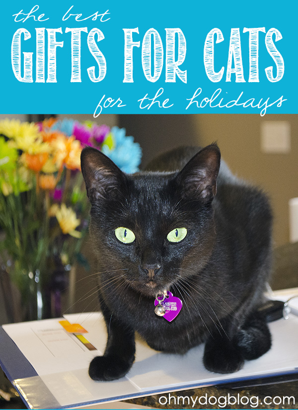The best holiday gifts for cats (with tons of giveaways!)