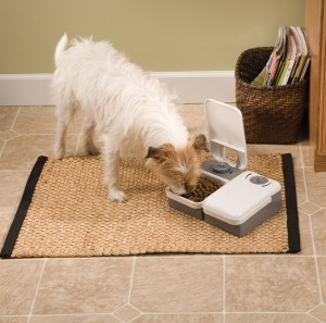 PetSafe_2-Meal Automatic Pet Feeder_Lifestyle Dog