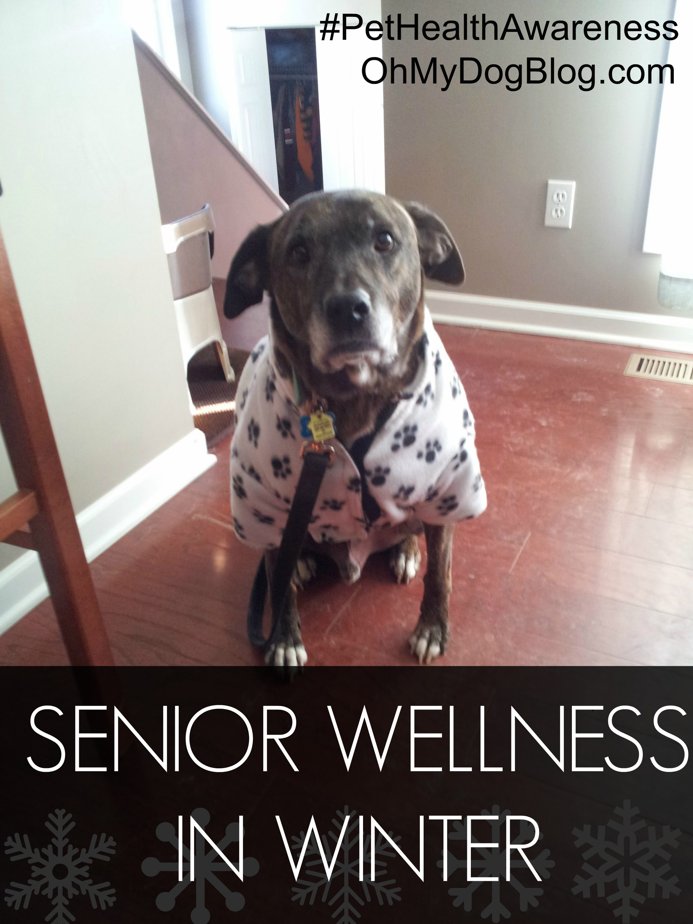 Senior Wellness in Winter #PetHealthAwareness