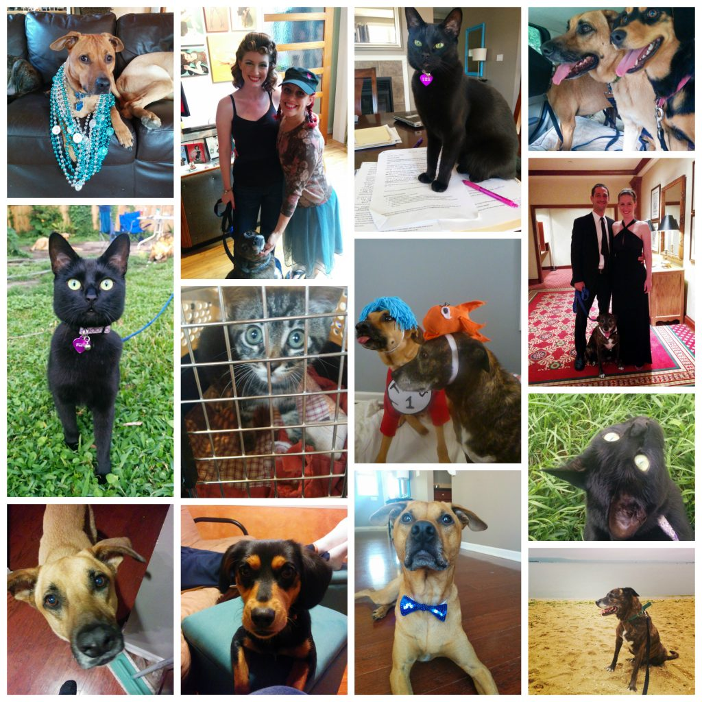 2014 in review | OhMyDogBlog.com