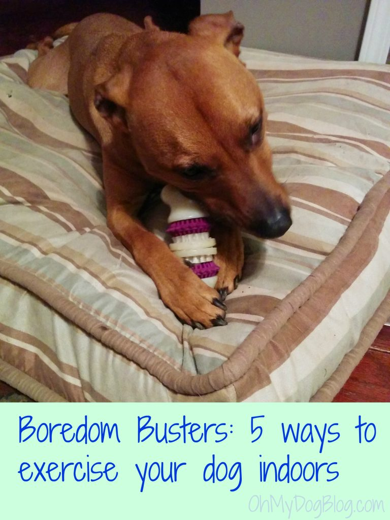 Boredom Busters 5 ways to exercise your dog indoors