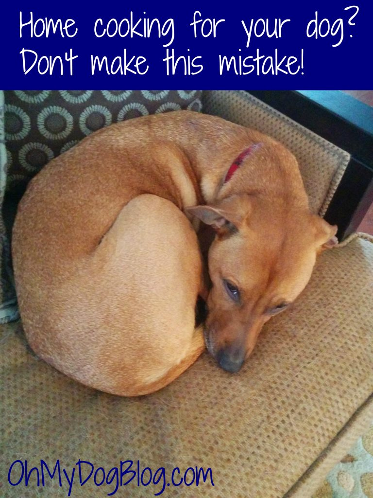 Home cooking for your dog Don't make this mistake!