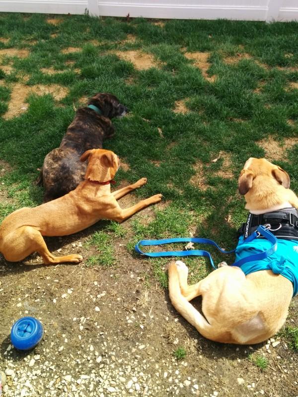 Emmett, Cooper, Lucas