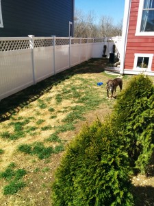 The backyard before pics