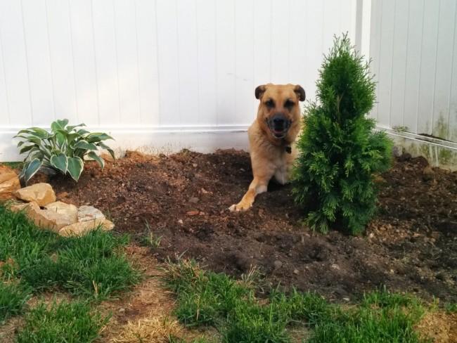Lucas' digging spot