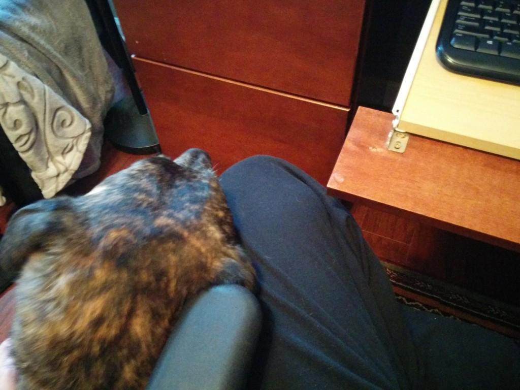 Emmett's stuck to my knee