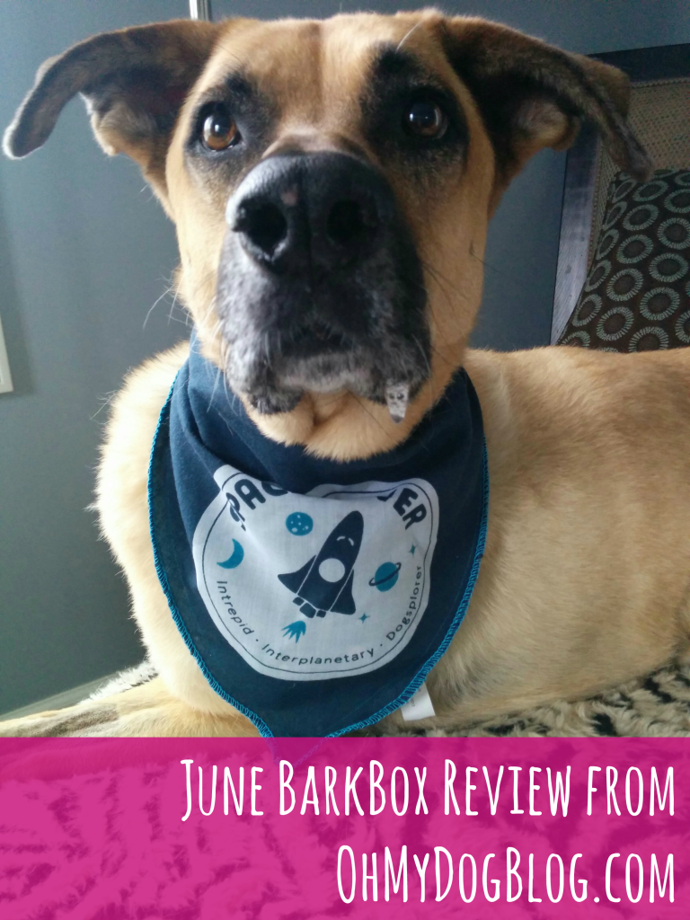 June BarkBox Review from OhMyDogBlog