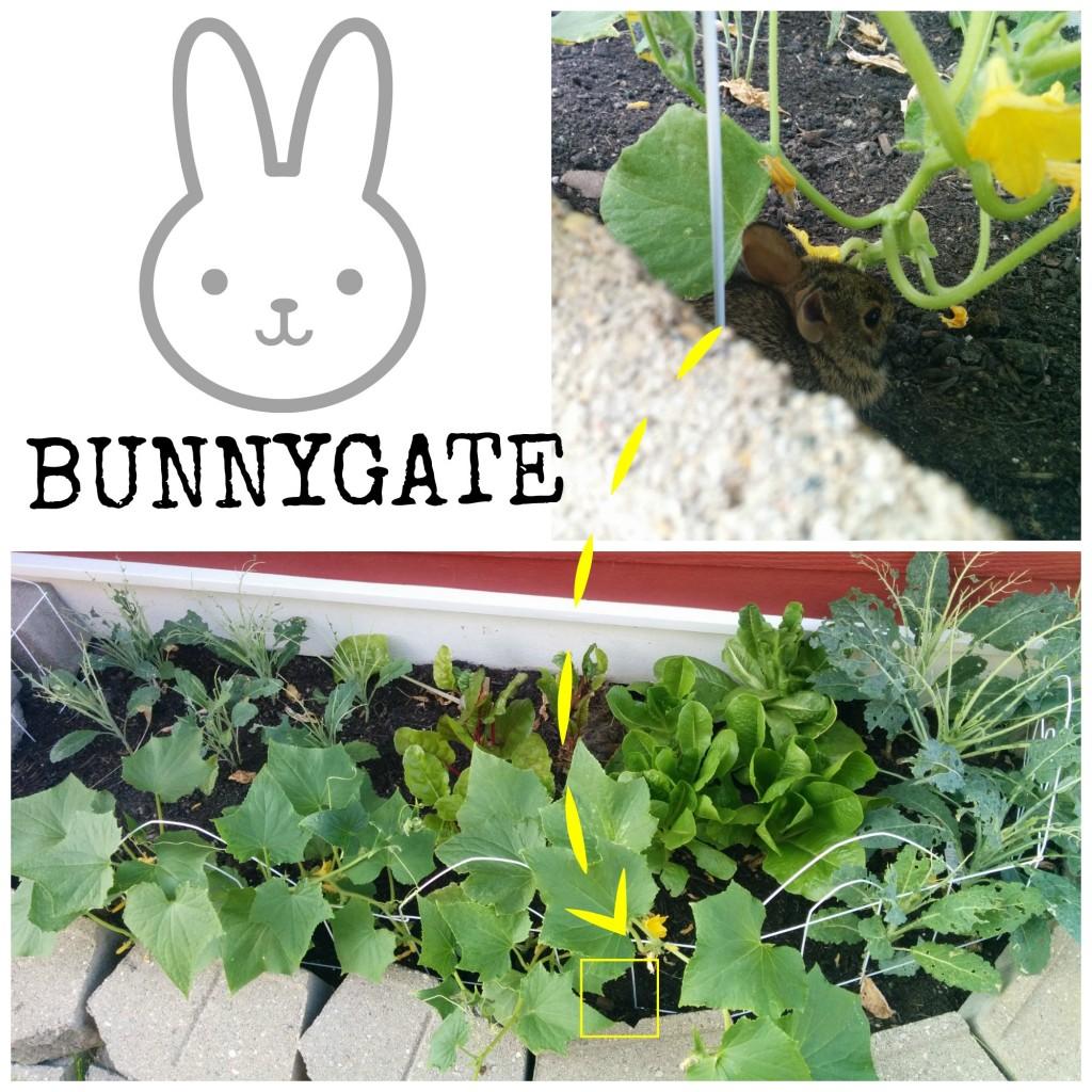 bunnygate