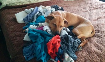 Cooper and the laundry