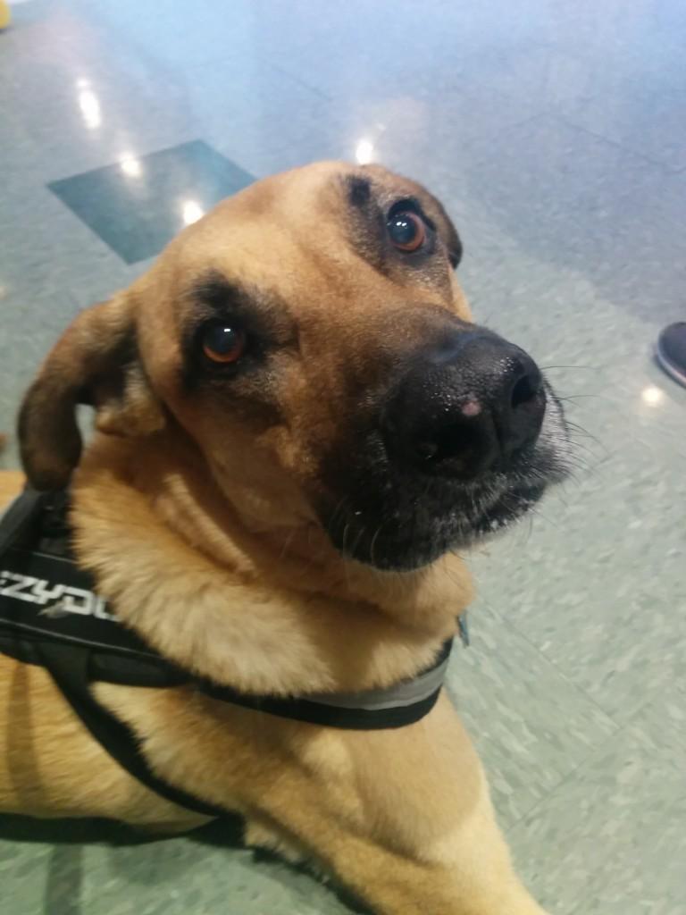 Lucas at the vet 08.21.15