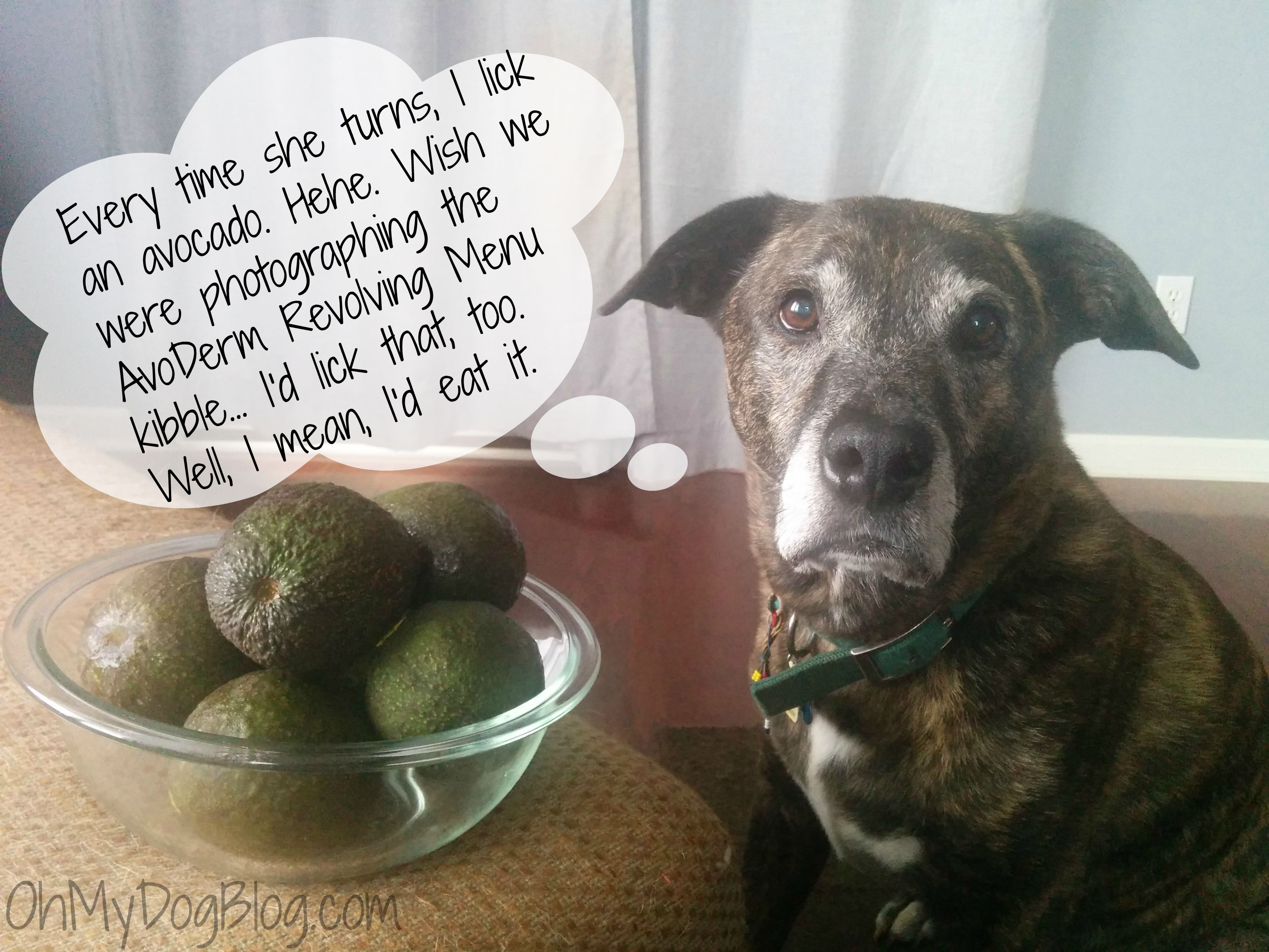 Avocados Are Good For Dogs