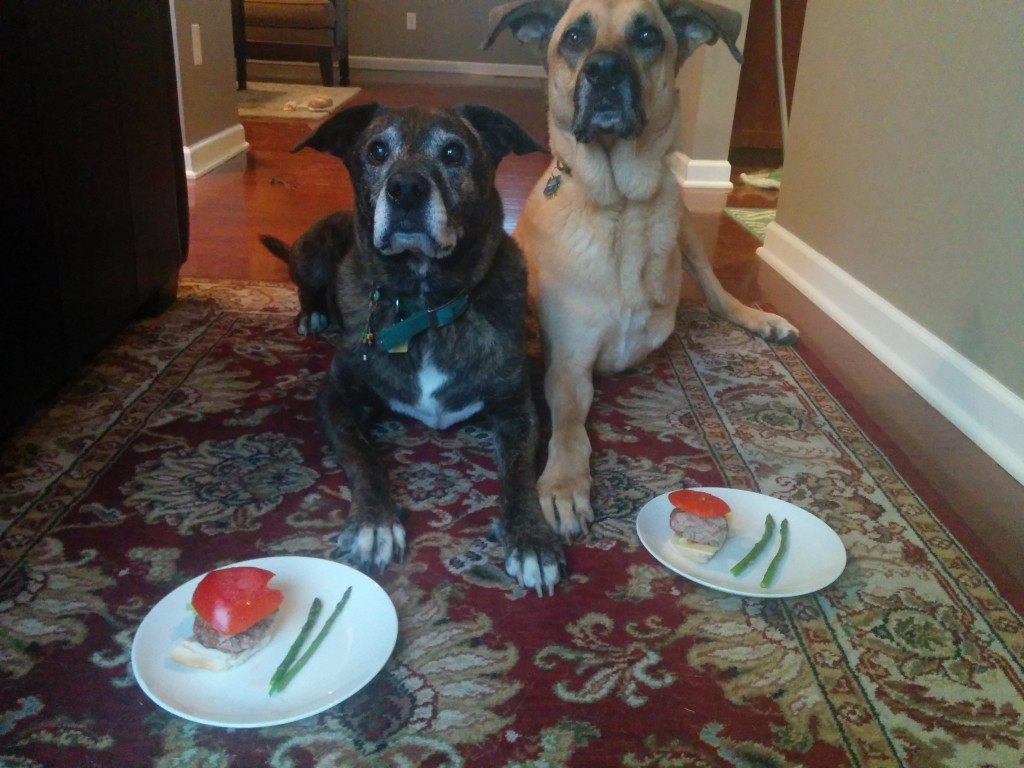 Dogs with cancer get turkey cheeseburgers