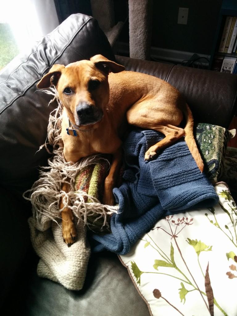 Cutie pants Cooper