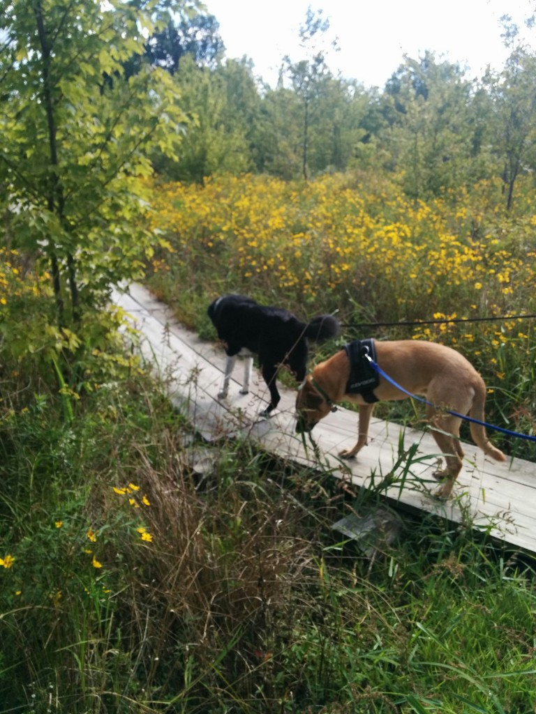Lucas and Cady go for a hike September 2015