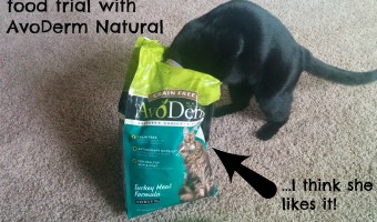 Newt's six week food trial with AvoDerm Natural