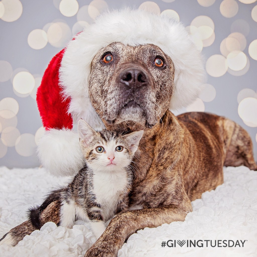 Support Best Friends on Giving Tuesday