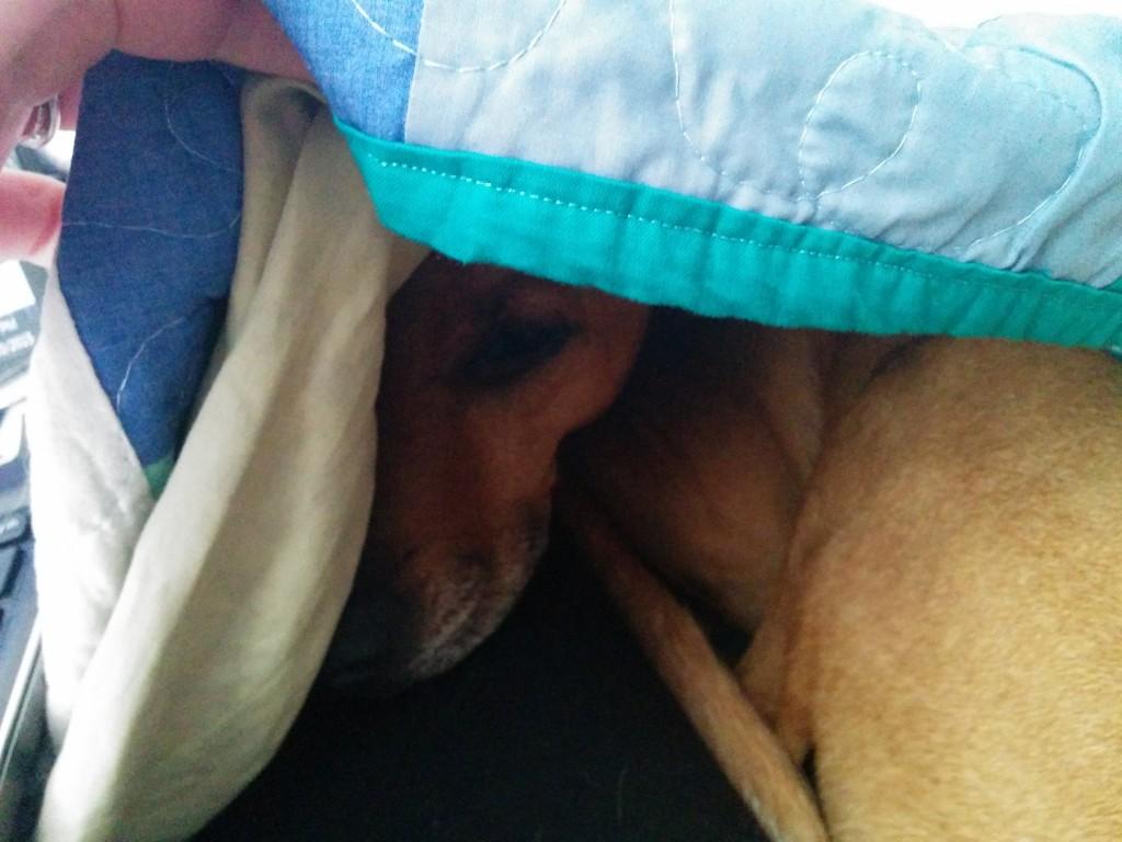 Cooper under his favorite quilt