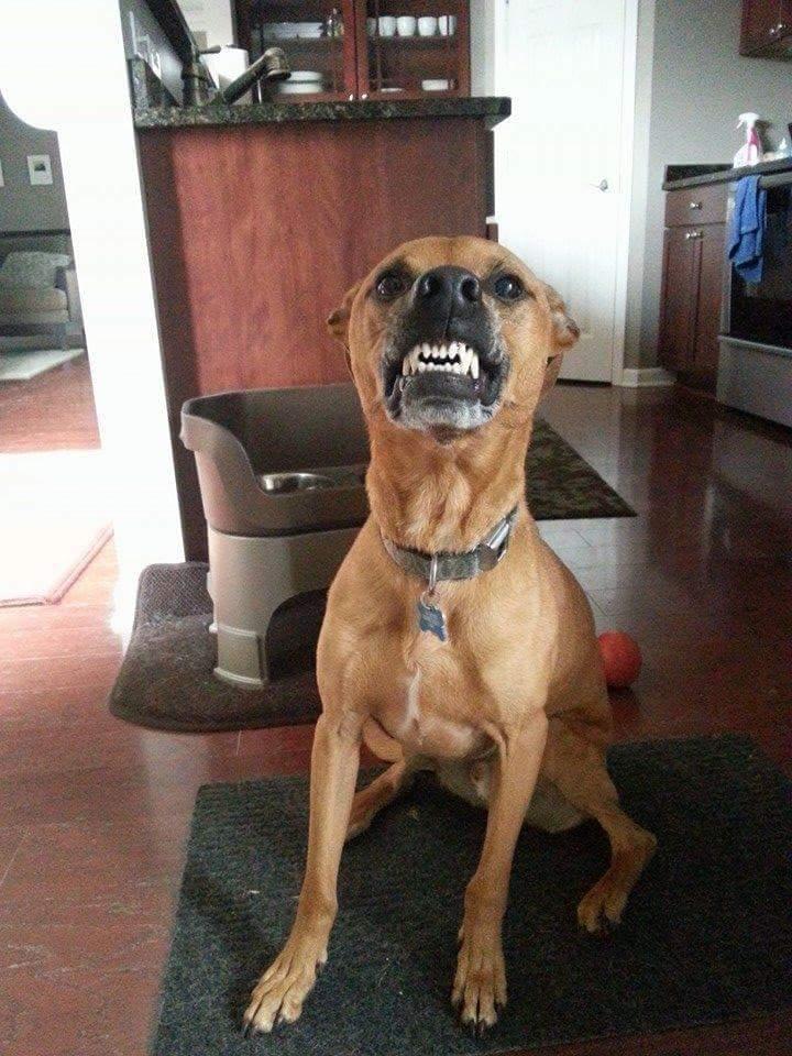 Cooper smiles
