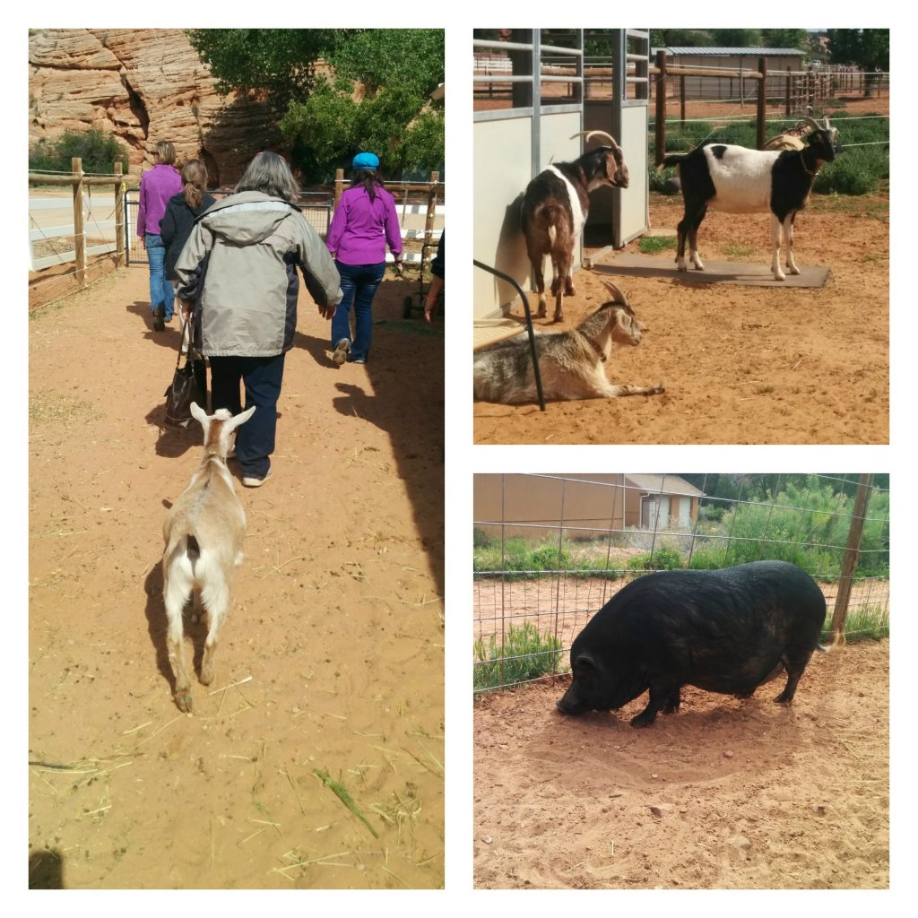 Pigs and Goats