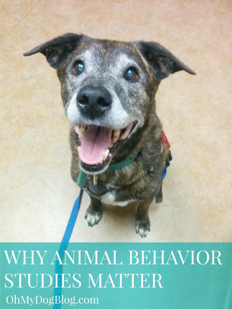Why animal behavior studies matter