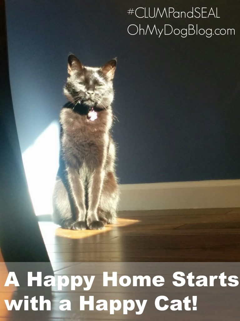 A Happy Home Starts with a Happy Cat | BlogPaws.com