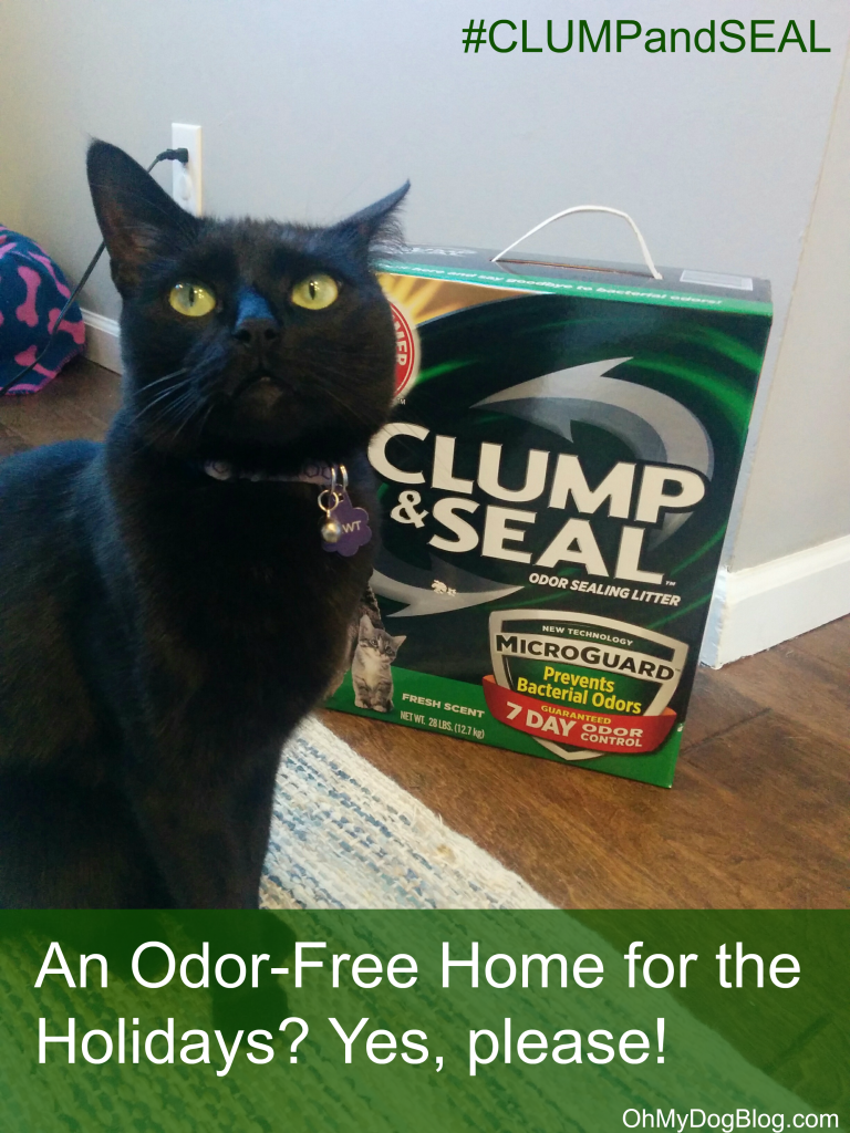 An Odor-Free Home for the Holidays with ARM & HAMMER