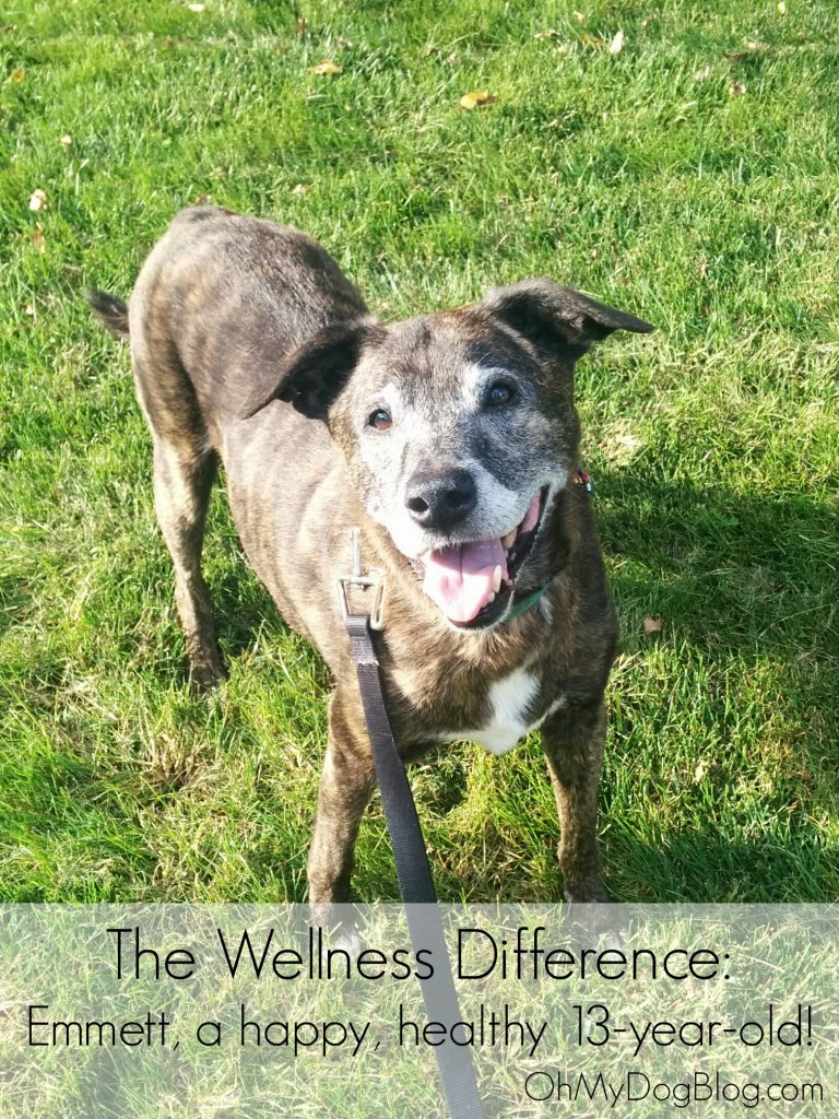 Emmett and the Wellness Difference