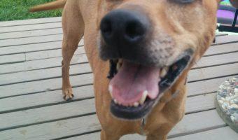 Cooper is so happy!