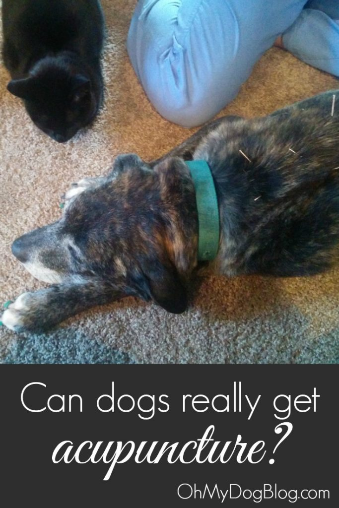 Can dogs get acupuncture? | OhMyDogBlog.com