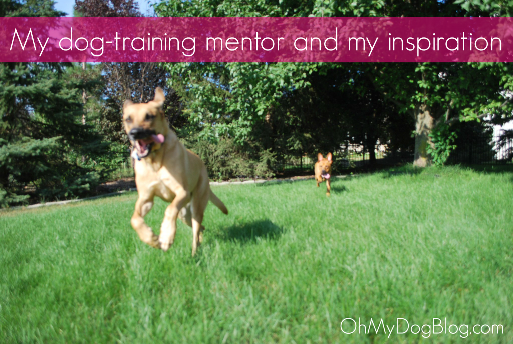 My dog training mentor | OhMyDogBlog.com