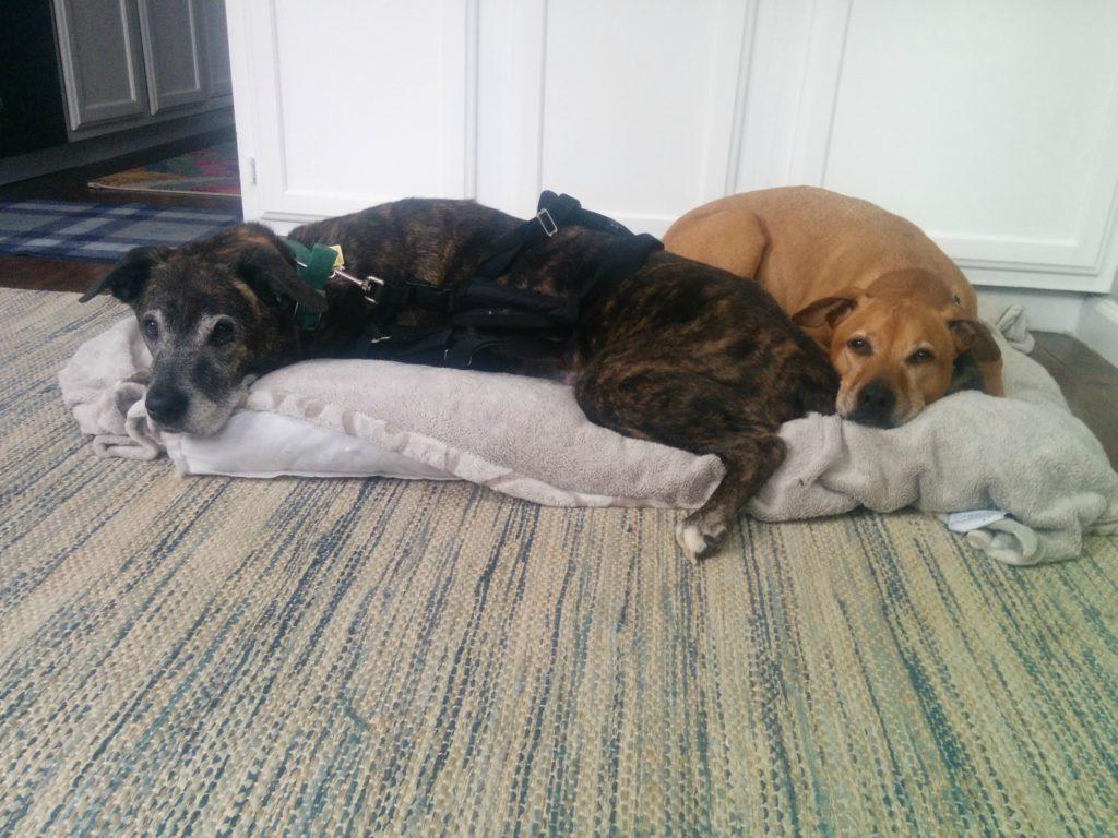 Emmett and Cooper February 2016