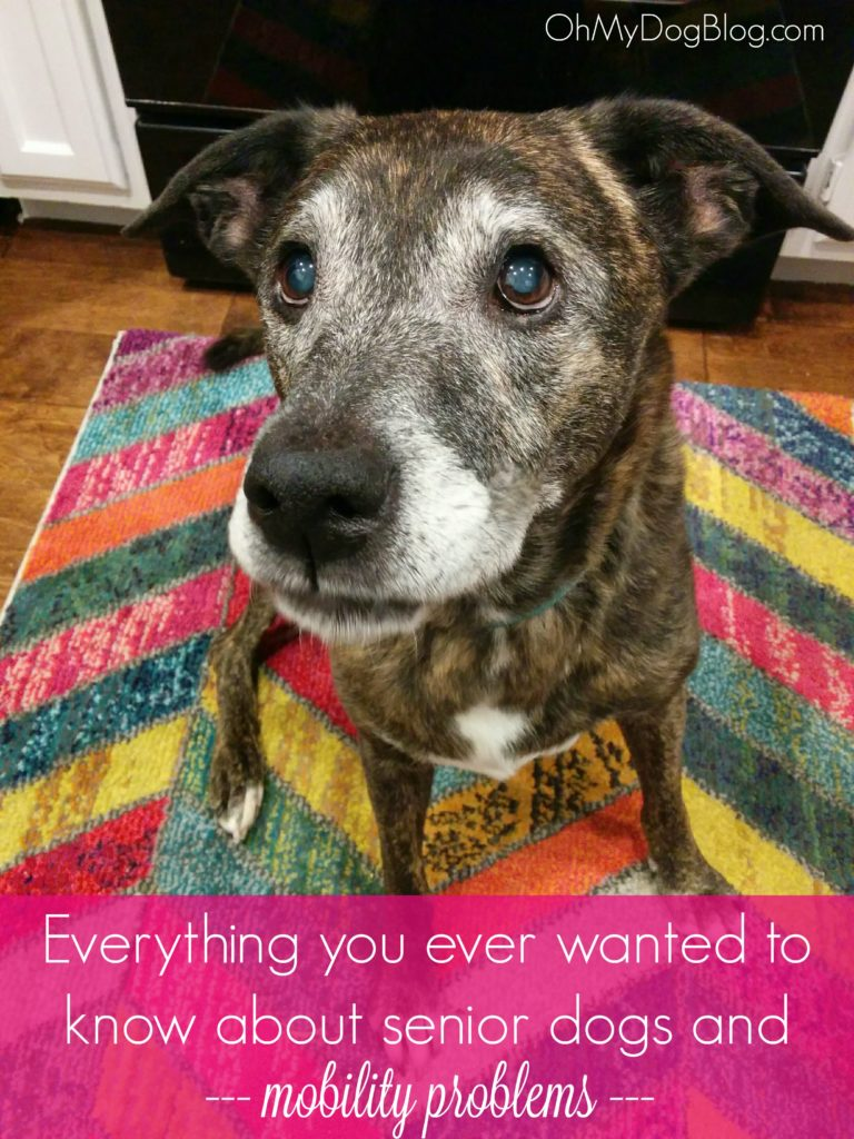 Everything you ever wanted to know about senior dogs and mobility | OhMyDogBlog.com
