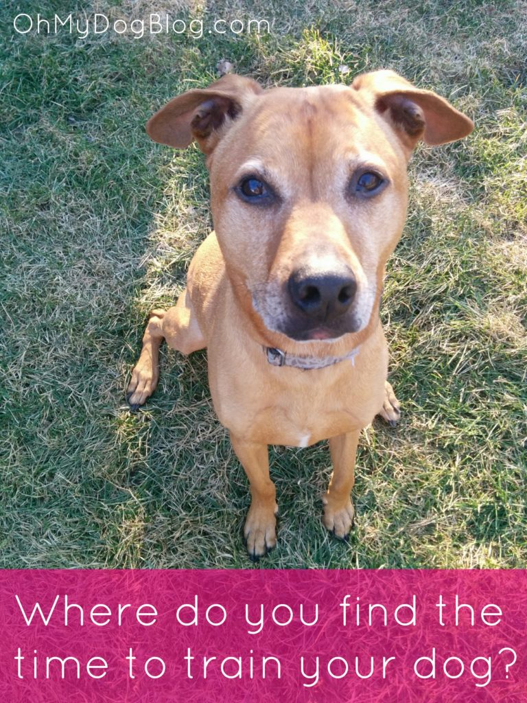 Where do you find the time to train your dog? from OhMyDogBlog.com