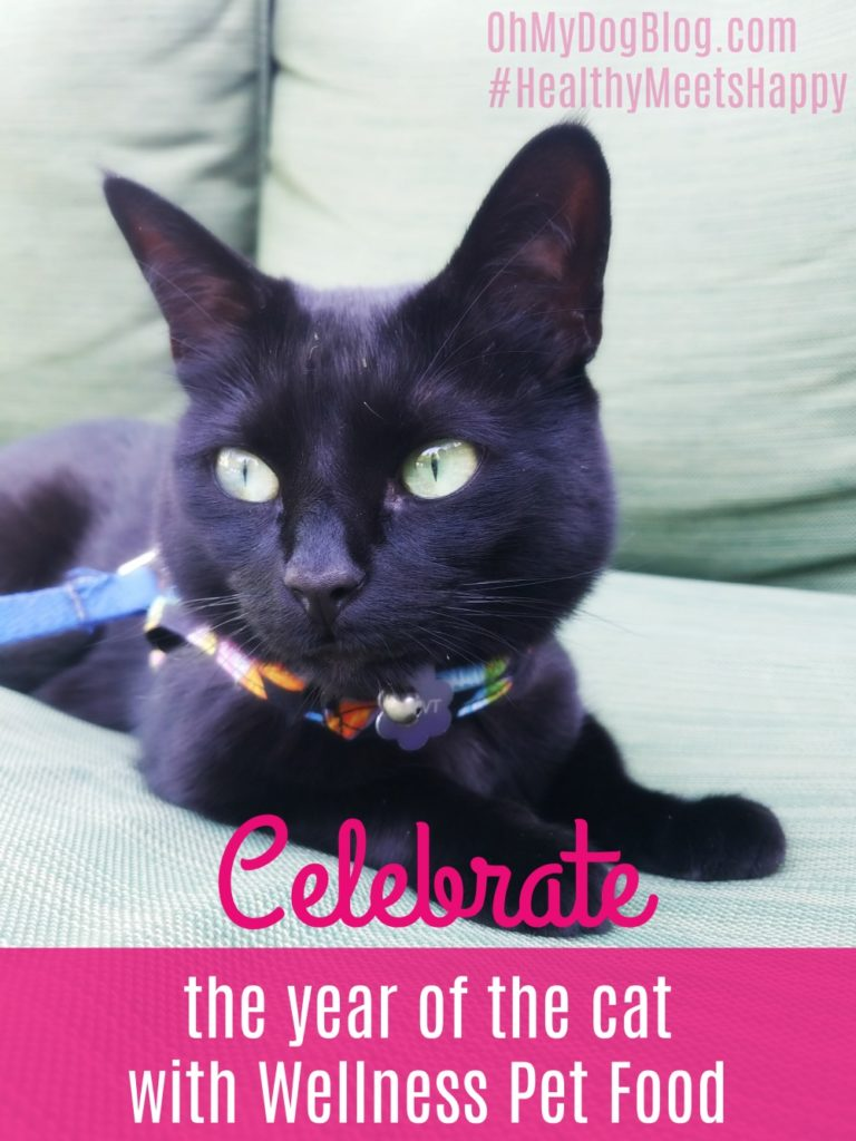 Celebrate the year of the cat with Wellness Pet Food