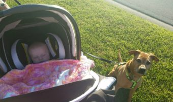 Cooper and Violet out for a walk
