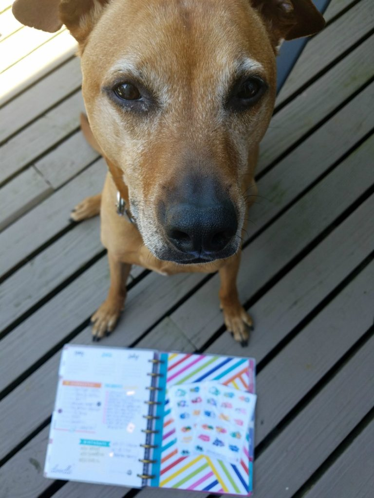 Cooper and my planner