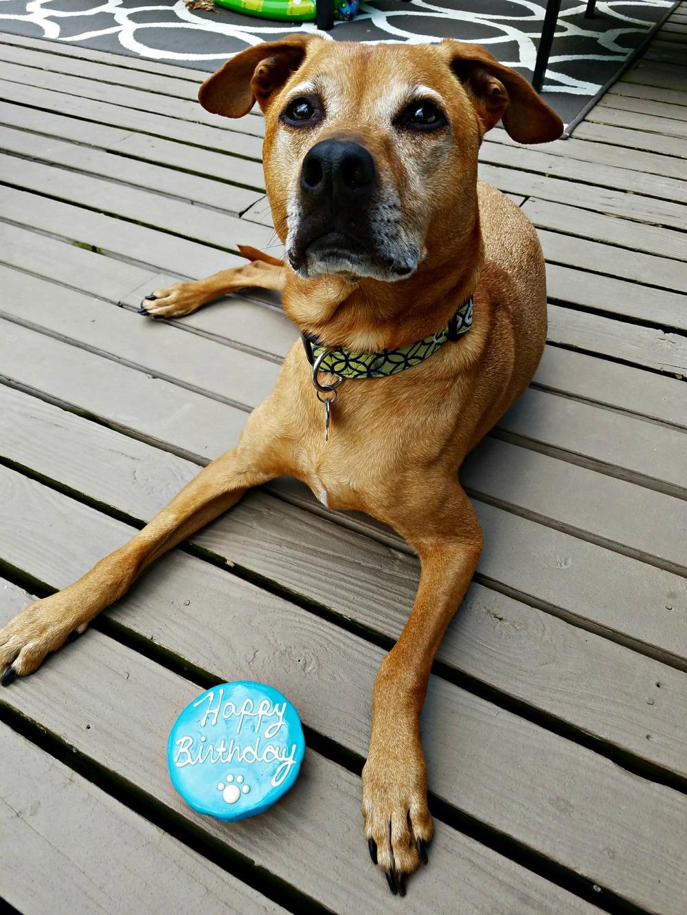 Cooper turns 7