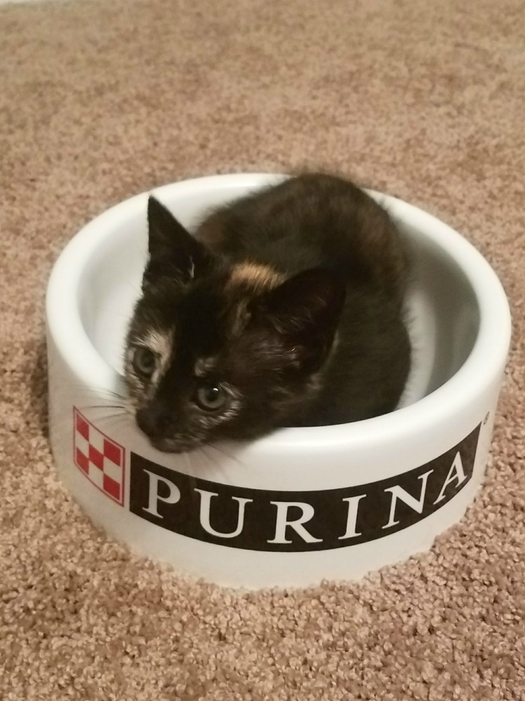 Ripley chills in the Purina bowl