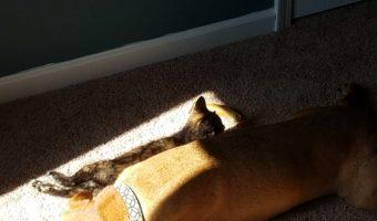 Ripley and Cooper snuggle in the sun