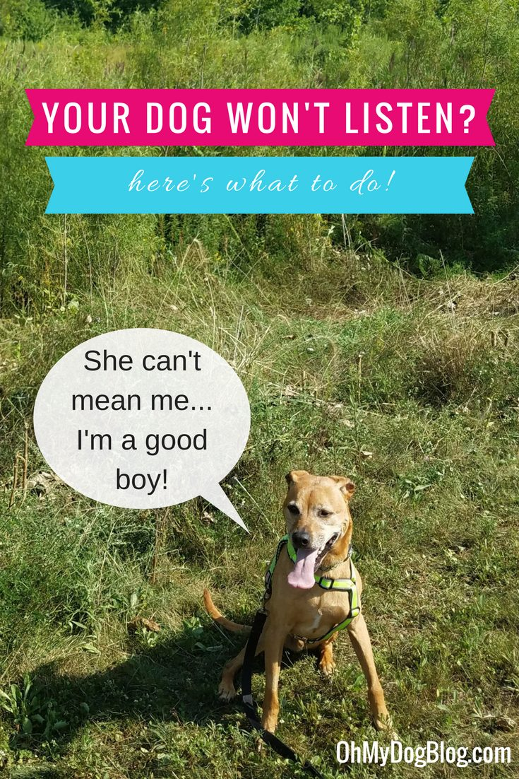 What to do when your dog won't listen - 3 tips
