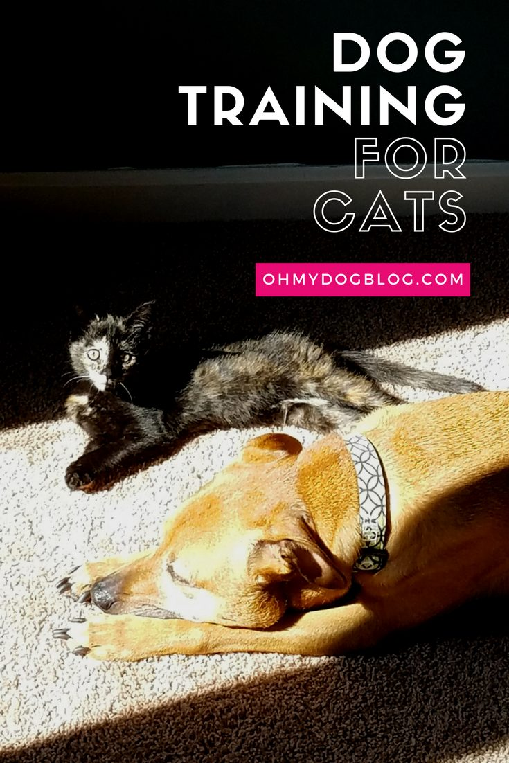 Dog training for cats: 3 tips from OhMyDogBlog.com