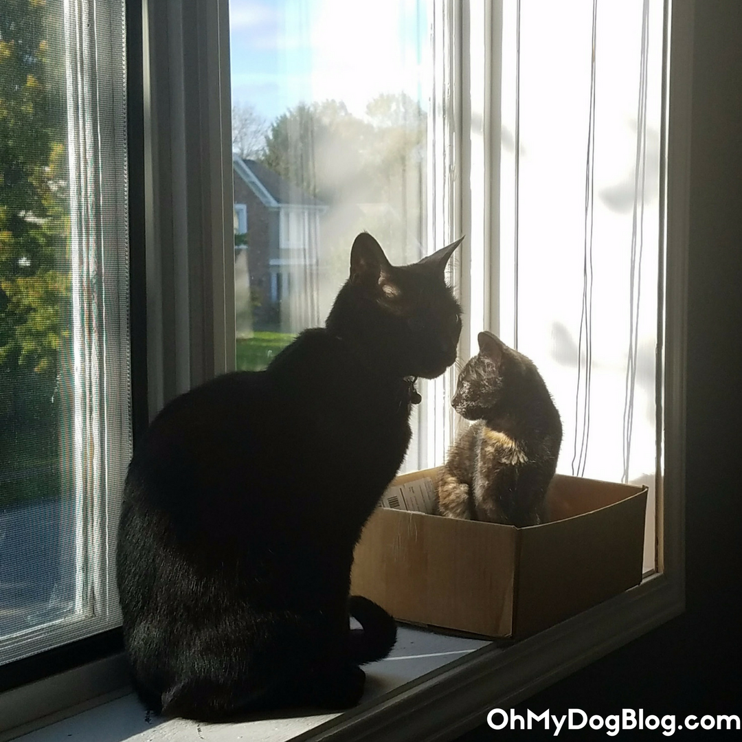 Introducing cats- How Ripley and Newt became BFFs