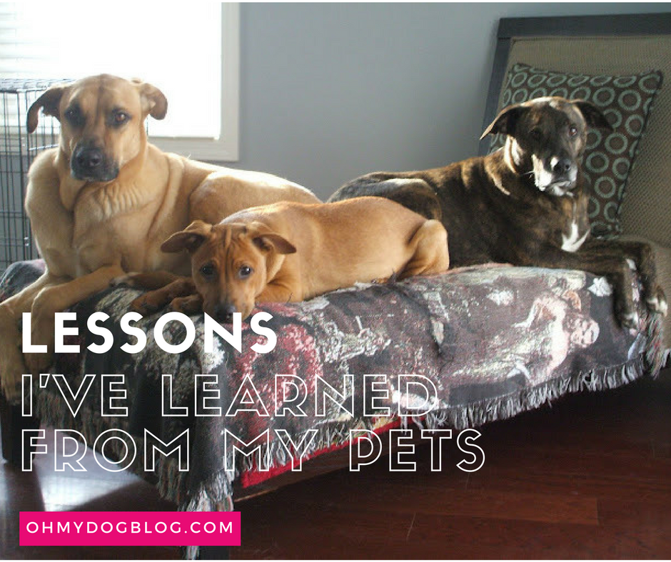 Lessons I've learned from my pets