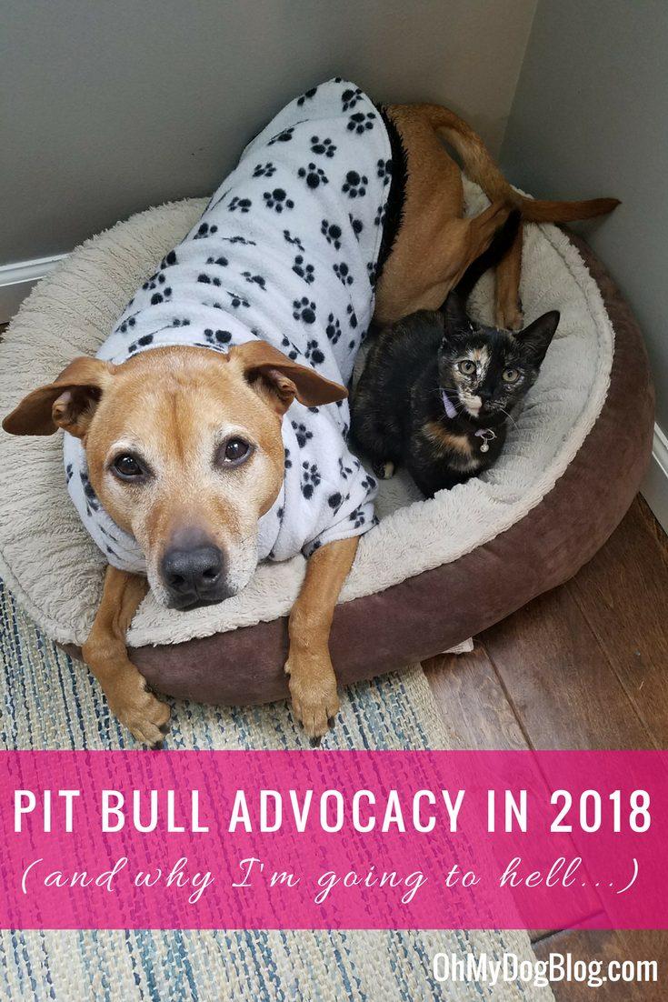Pit Bull Advocacy in 2018