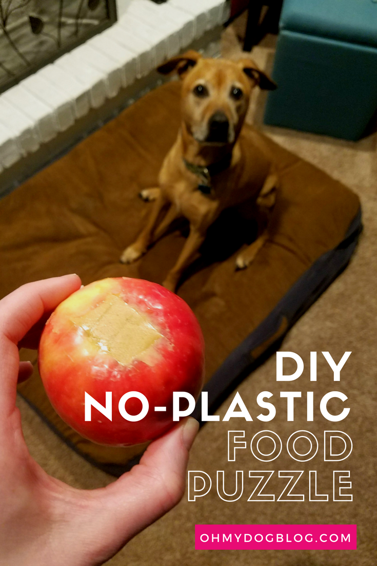 DIY Plastic-Free Food Puzzle for Dogs