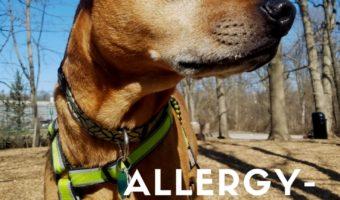 Cooper's Allergy-Friendly Diet, Routine, and IHT Update