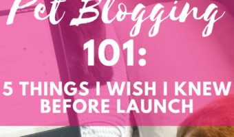 Pet Blogging 101_ Or, what I wish I knew before I started!