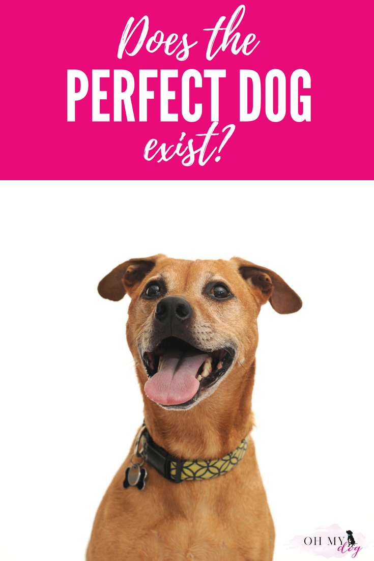 Is there a such thing as a perfect dog? (Spoiler alert: There is! And he's probably asleep at your feet right now!)