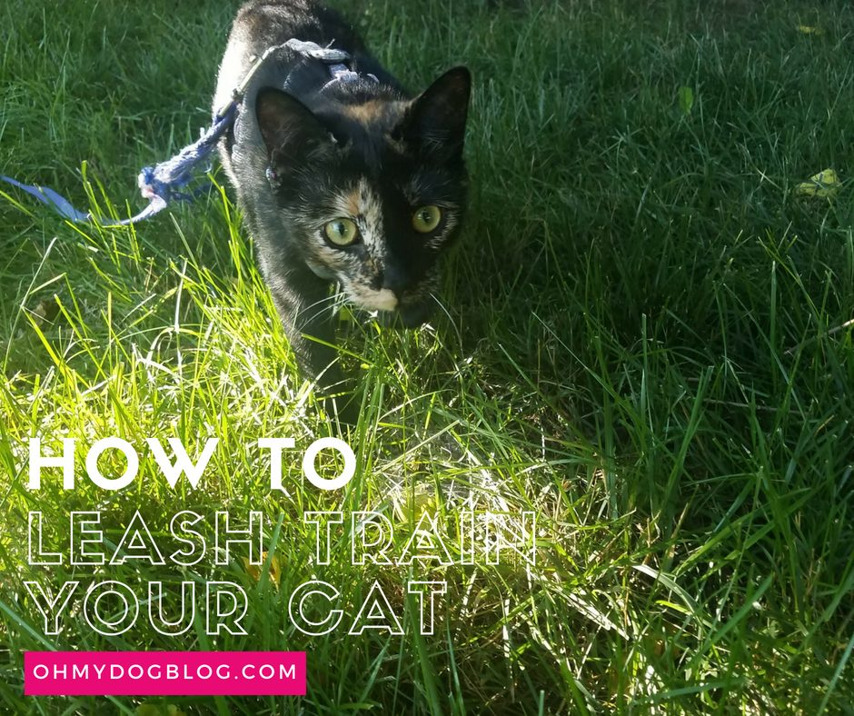Train Your Cat to Walk on a Leash_ Outdoor Safety for Indoor Cats (1)