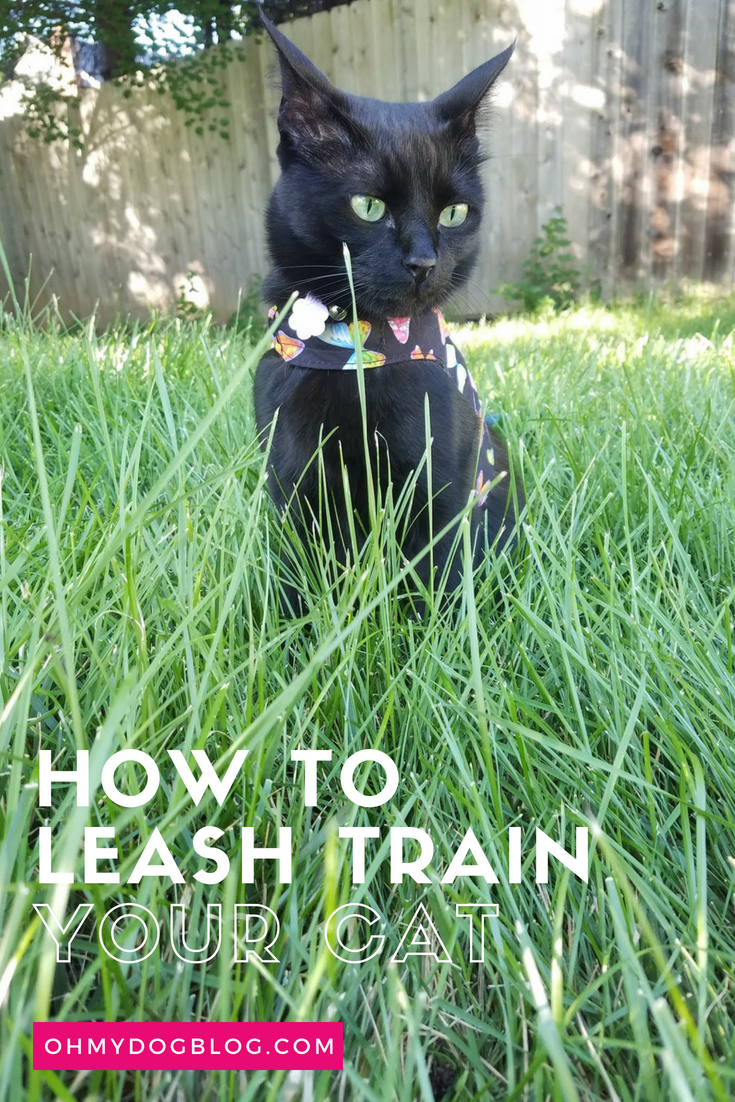 Train Your Cat to Walk on a Leash_ Outdoor Safety for Indoor Cats